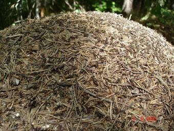 وجوه الإعجاز العلمي النمل