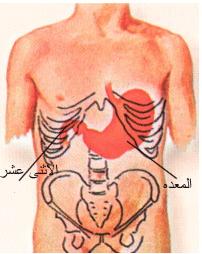 الغذائي الاسلامي 1188163534clip_2.jpg