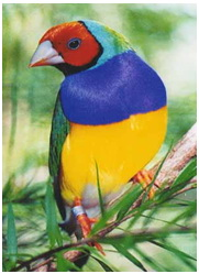 آيات الله في طيران الطيور 1205006375clip_3.jpg