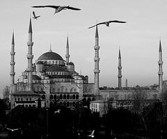 حاجة المسلمين إلى تعلم فقه التمكين