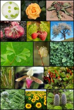 تسع معان للزوجية في القرآن الكريم وعالم النبات