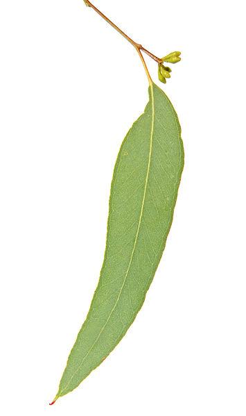 ][علمتني الأشواك النباتية الرحمة الإلهية..من آيات الله في النبات][