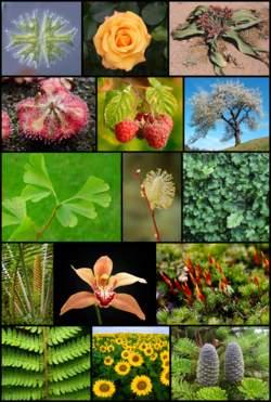 العقل نعمة إلهية والتفكير فريضة 1251547890250px-diversity_of_plants_image_version_5.jpg