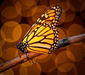 سر ألوان الفراشات