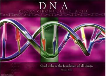 الشيفرة الوراثية سر الحياة الأعظم