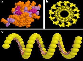 طي البروتينات السر الذي حير العلماء