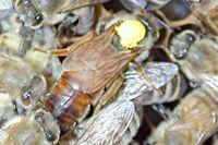 آيات الله في عالم النحل