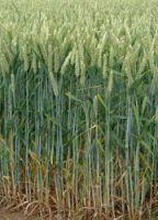 الحطام والهشيم إعجاز علمي في عالم النبات