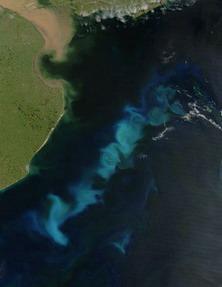 ولا الظل ولا الحرور 461px-Phytoplankton_