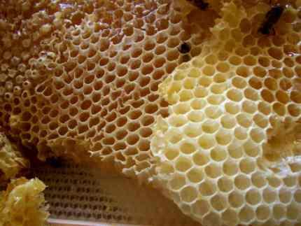 العسل فيه شفاء للناس