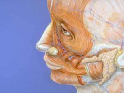 الوجه مرآة النفس معجزة علمية