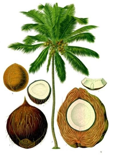 معجزة النبات ـ البذرة