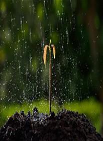 عالم النبات ـ أختلاط الماء بالارض الهامدة ـ نبات المحاصيل - See more at: http://www.quran-m.com/oldsite/container2.php?fun=bookarchive#sthash.AEuVhlDK.dpuf
